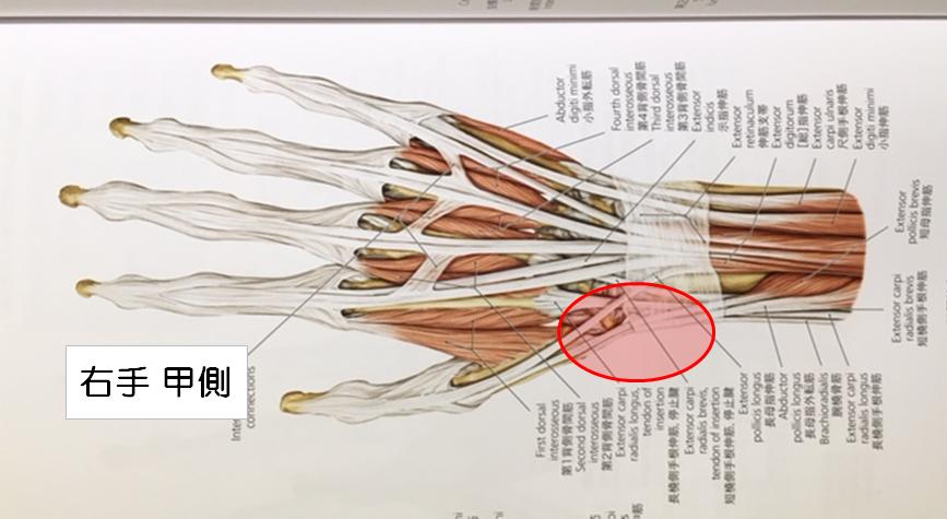 腱鞘炎の位置
