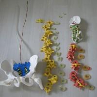 脊柱模型 分解