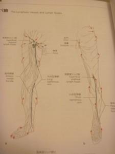 下肢のリンパ