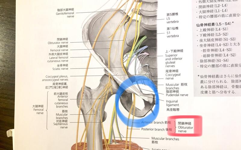 閉鎖孔 股関節からくる膝内側の痛み