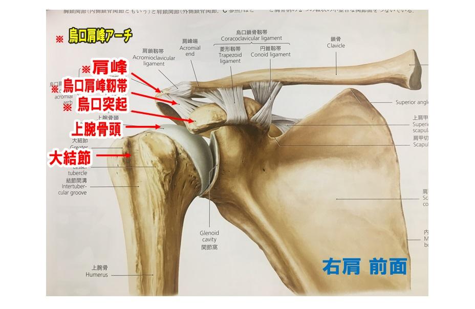 肩棘上筋腱腱板断裂1