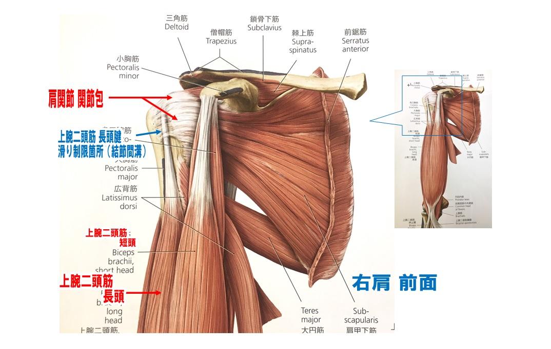 癒着性肩関節包炎、40肩50肩、肩関節周囲炎